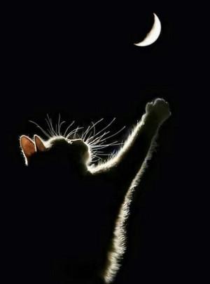 Sweet Cat pagkuha ng larawan