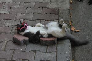 Sweet Cat photographie