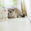 Sweet Cat Photography - photography photo