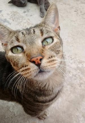Sweet Cat fotografia