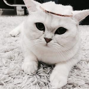 Sweet Cat