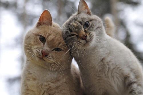 Hasil gambar untuk cat sweet
