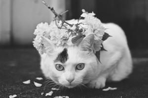 Sweet Cat upigaji picha