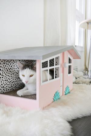 Sweet Cat ফটোগ্রাফি