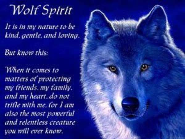 serigala spirit