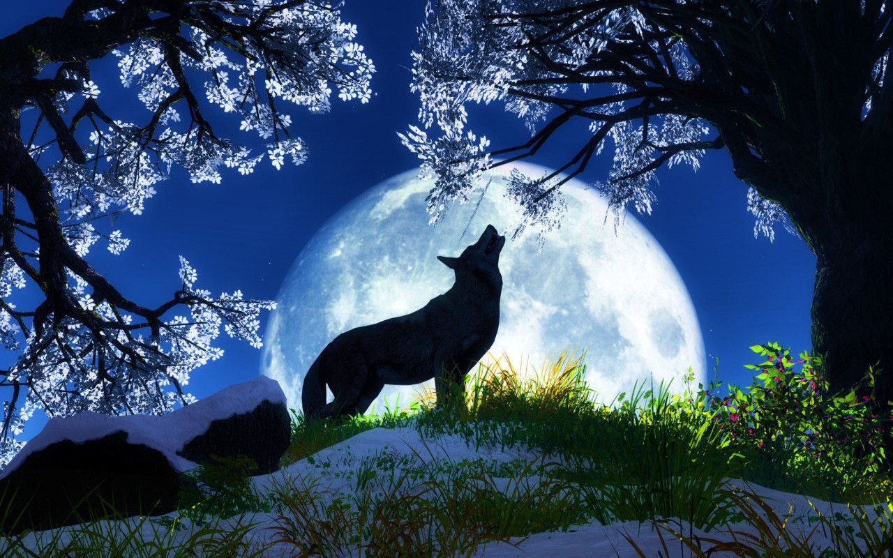 Wolves Images Wolf HD Wallpaper And Background Photos