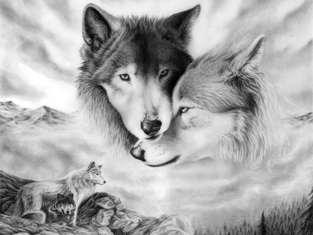 wolves images wolves hd wallpaper and background photos 40487493