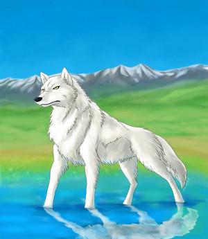 ऐनीमे भेड़िया 1