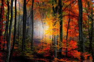 nature फोटोग्राफी