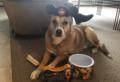 Disney Fan - disney photo