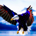 American Eagle - united-states-of-america icon