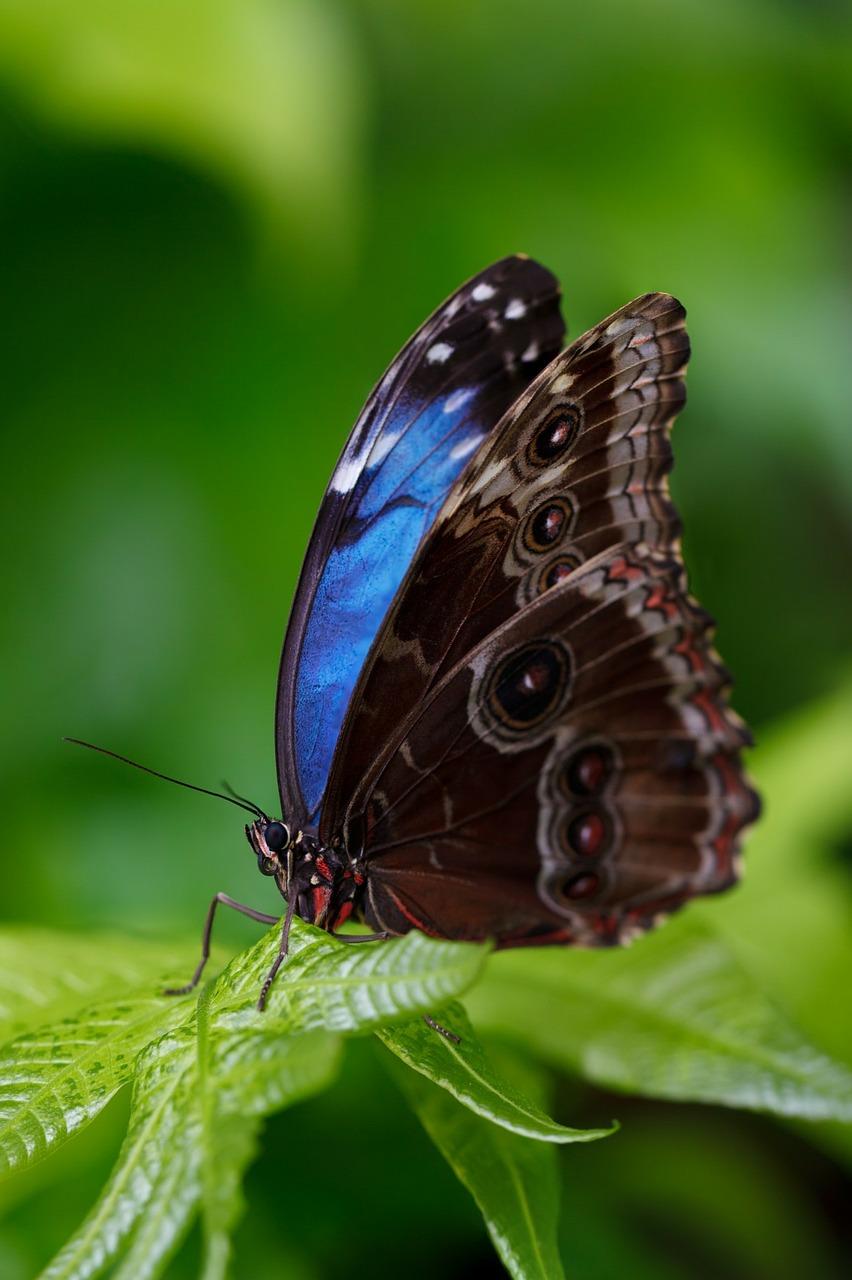 Beautiful borboleta