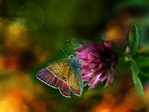 Beautiful Colorful Butterflies