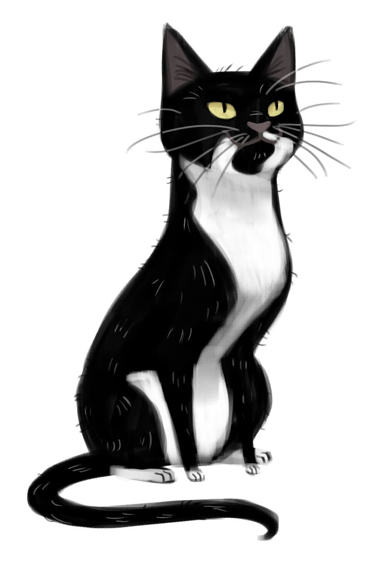 Minacat Images Cat Drawing Hd Wallpaper And Background Photos 40534665
