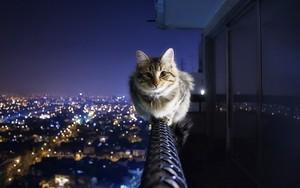 Cat Enjoying The View