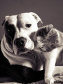 Cat and Dog - cats photo