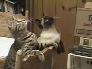 gatos who amor disco