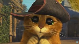 Cute Kitten.JPG