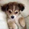 개 사진 entitled Cute 강아지