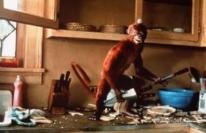 Destructive Monkey