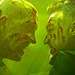 For Me 1x7 - van-helsing-syfy icon