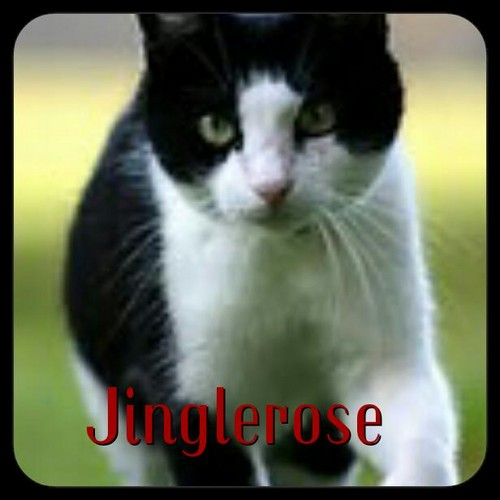 Warrior Cats Images Jinglerose Wallpaper And Background