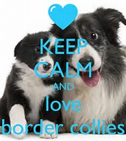 Keep Calm and love Border Collies