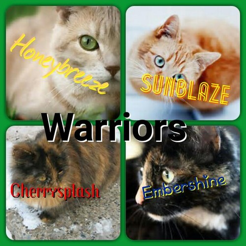 Warriors The Prophecies Begin Book 3: WARRIOR CATS Images Main Characters In Embershine's