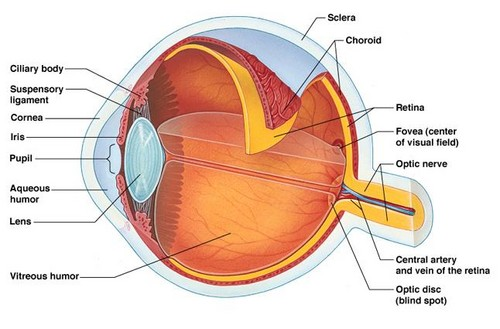 Science 바탕화면 titled Parts of Eye