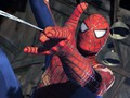 Spider Man - spider-man photo