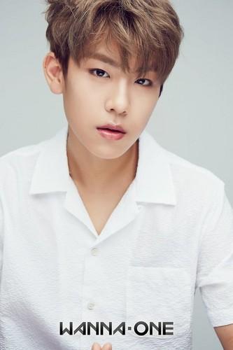 Wanna One 壁纸 called Woojin♥ ღ
