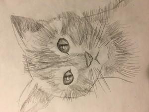 kitty!😺