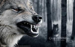 100 Game of Thrones Wide Screen वॉलपेपर्स Set 2 98