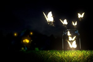 Awesome mariposas