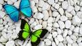Awesome Butterflies - butterflies photo