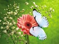 Awesome Butterflies - butterflies wallpaper
