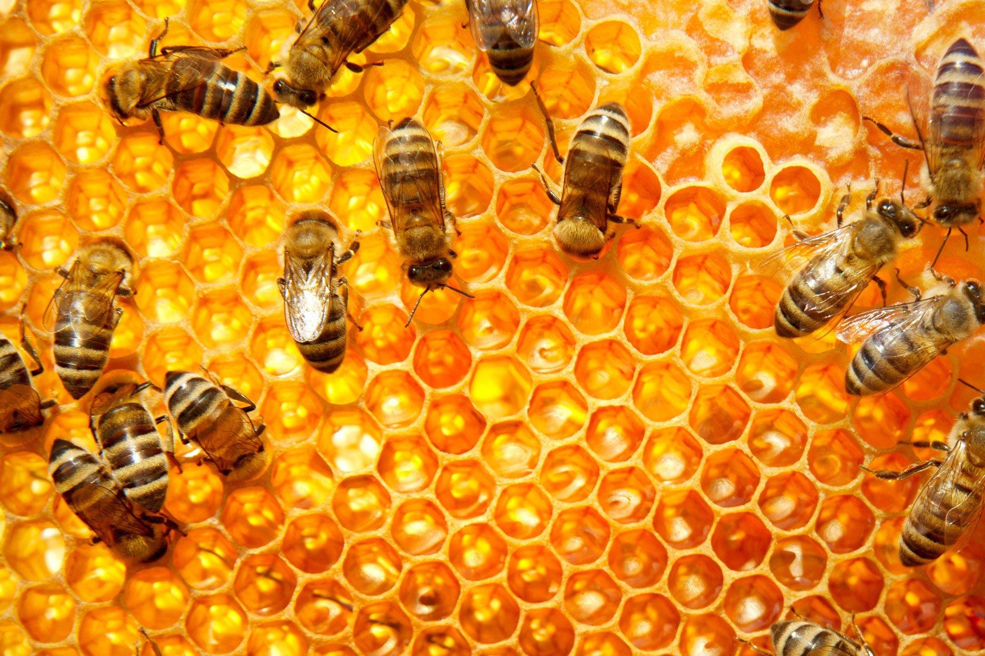 「BEE」的圖片搜尋結果