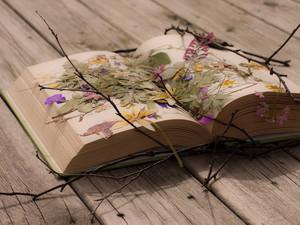 Book, দেওয়ালপত্র