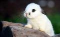 Bunnies - bunny-rabbits photo