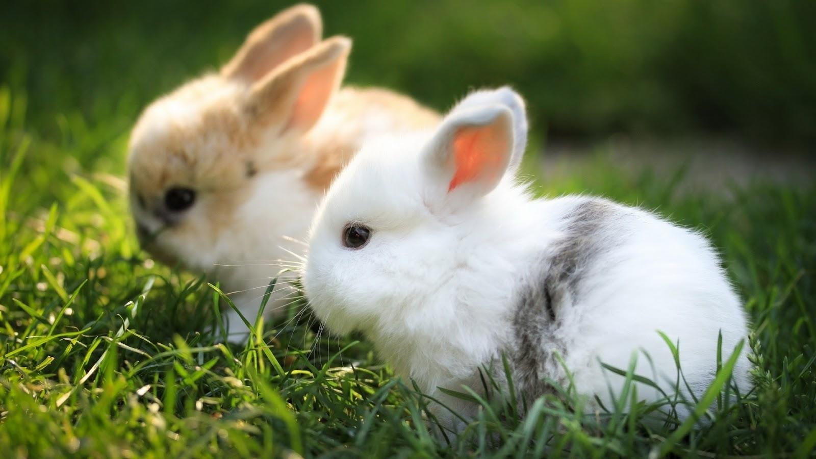 swf动画素材兔子