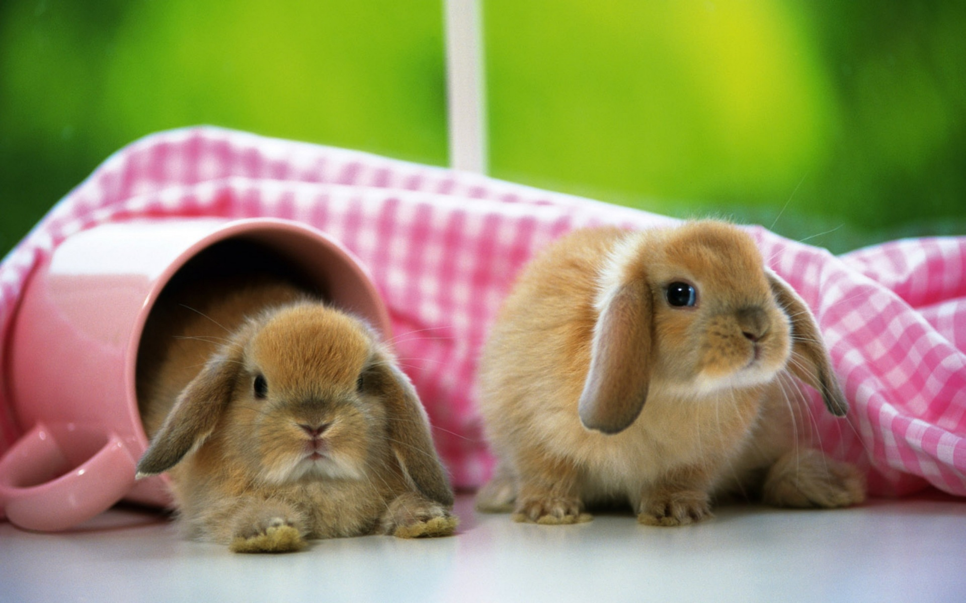 Rabbits Images Bunnies HD Wallpaper And Background Photos