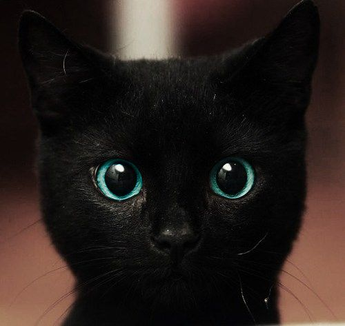 Black Cats Images Cute Wallpaper And Background Photos 40630354