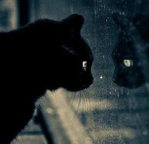 Darn rain...