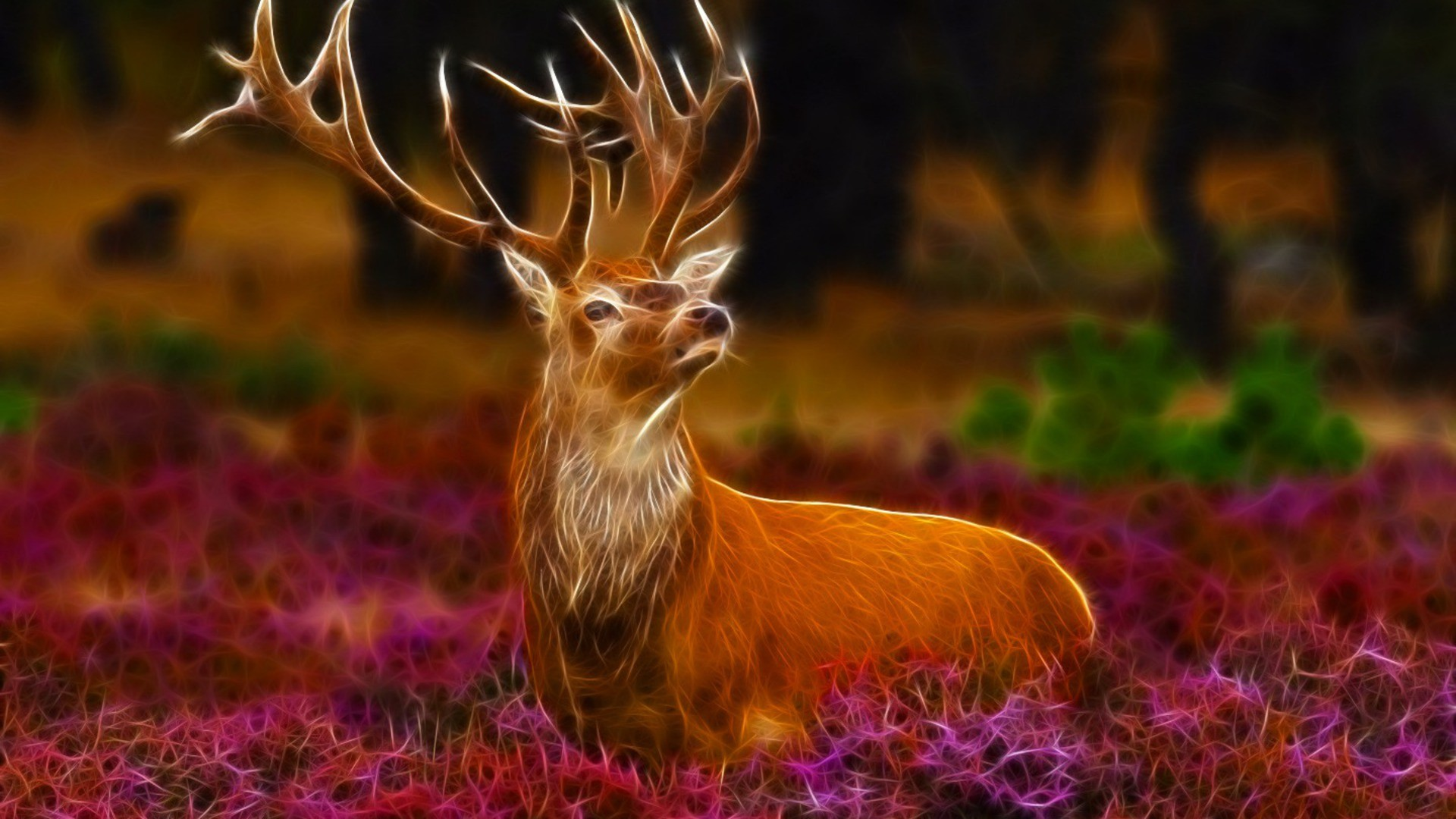Deer Wallpaper and background Animals