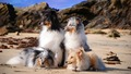 Dogs - dogs wallpaper
