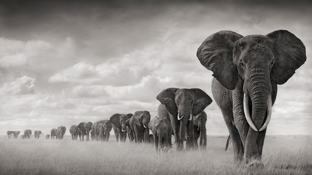 Elephants images Elephants HD wallpaper and background photos