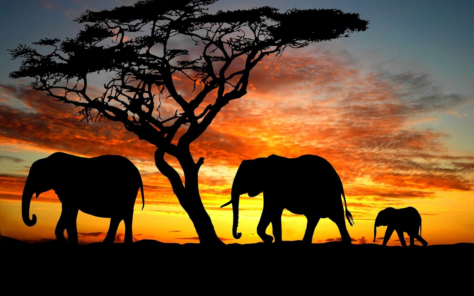 elephants images elephants hd wallpaper and background photos (40609364)