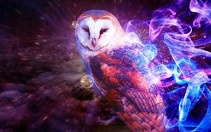 幻想 Owl