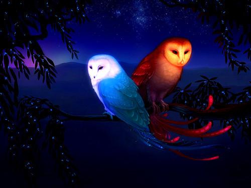 Owls fond d'écran called fantaisie Owls