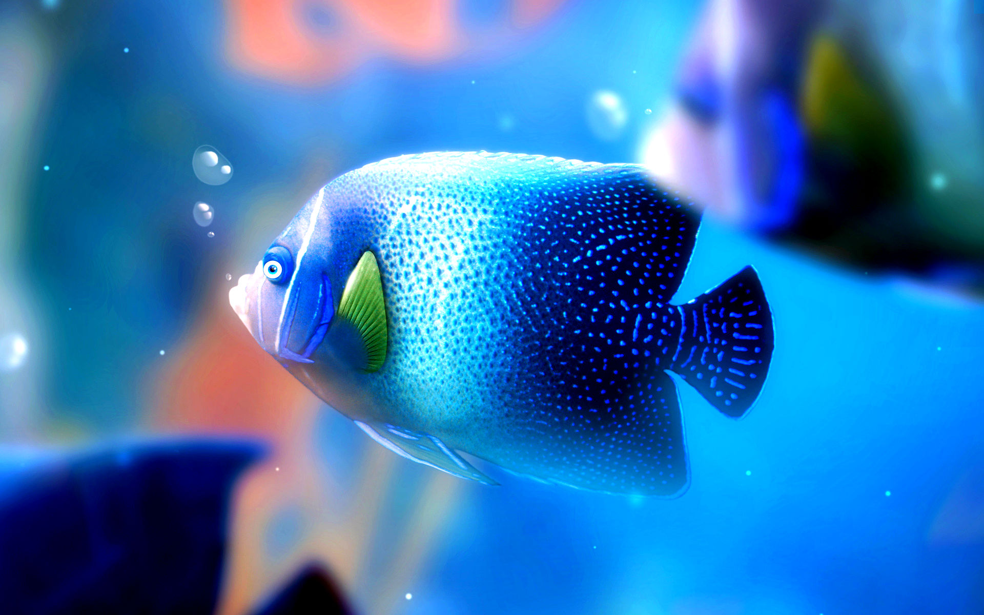 Fish Images Fish Hd Wallpaper And Background Photos 40609405